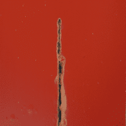 Metal-Paint-with--ASCOTRUST1